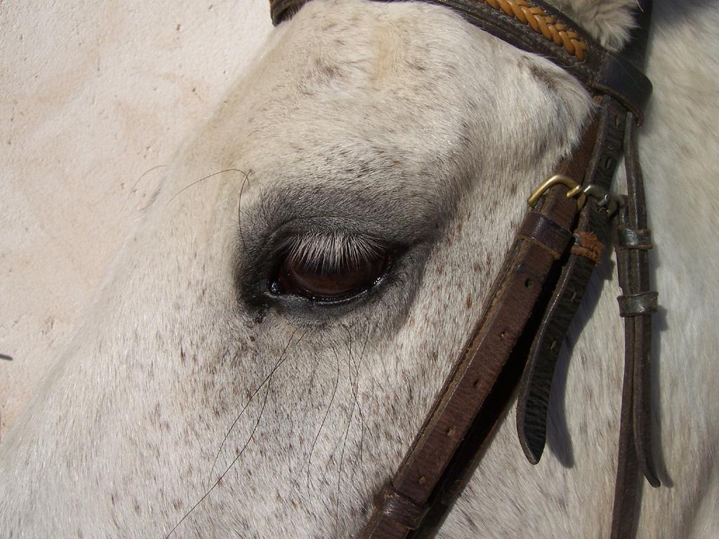 Animaux : Oeil de cheval